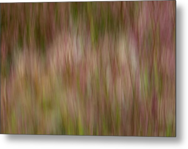 More Lake Grasses Metal Print
