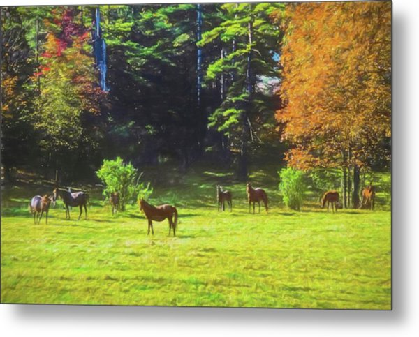 Morgan Horses In Autumn Pasture Metal Print