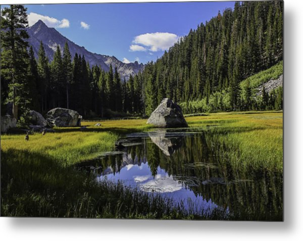Morning At Grouse Meadow Metal Print