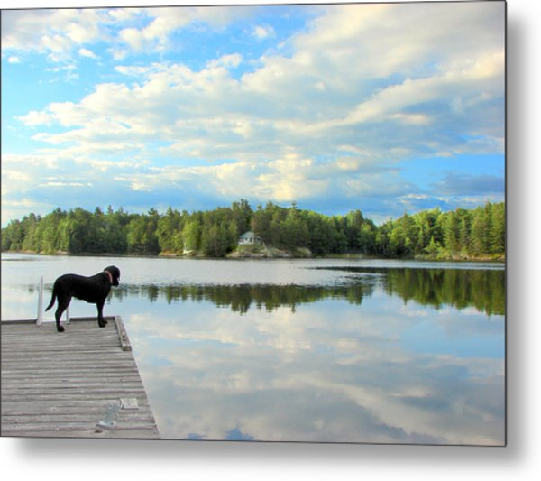 Morning At Pine Lake Metal Print