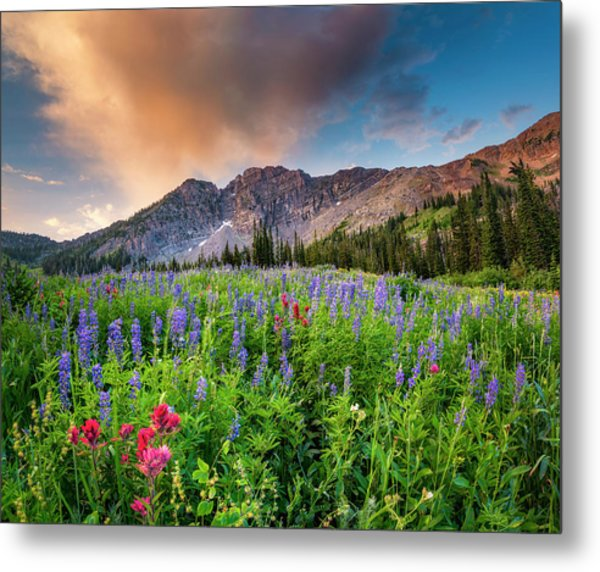 Morning Flowers In Little Cottonwood Canyon, Utah Metal Print