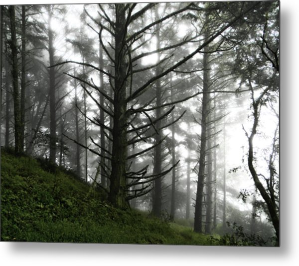 Metal Print featuring the photograph Morning Forest Fog II by Pacific Northwest Imagery
