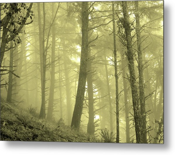 Metal Print featuring the photograph Morning Forest Fog by Pacific Northwest Imagery