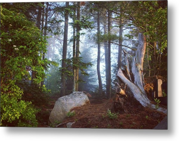 Metal Print featuring the photograph Morning Forest Light by Jessica Tabora