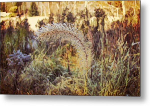 Morning Frost Metal Print by JAMART Photography