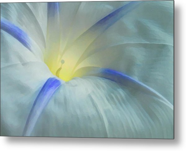 Morning Glory Metal Print by Gene Sizemore