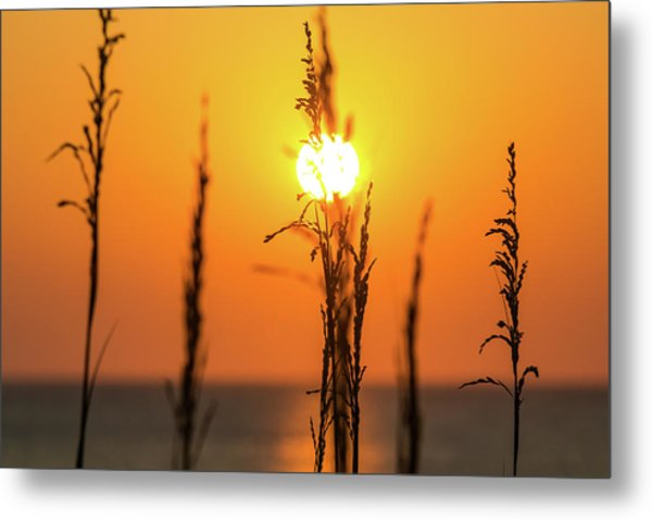 Morning Glow Metal Print by AM Photography