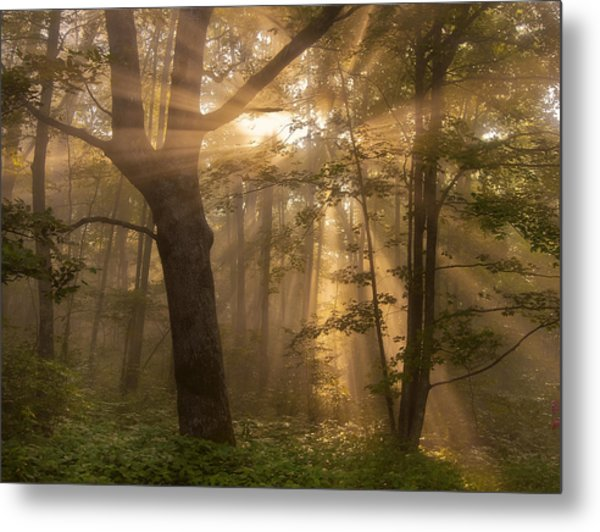 Morning God Rays Metal Print