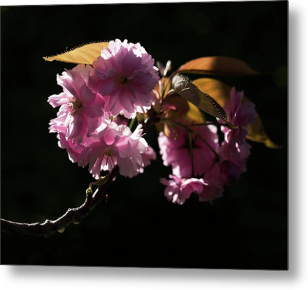 Metal Print featuring the photograph Morning Light by Helga Novelli