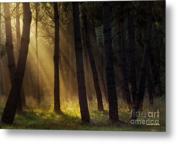 Morning Light In The Forest Metal Print