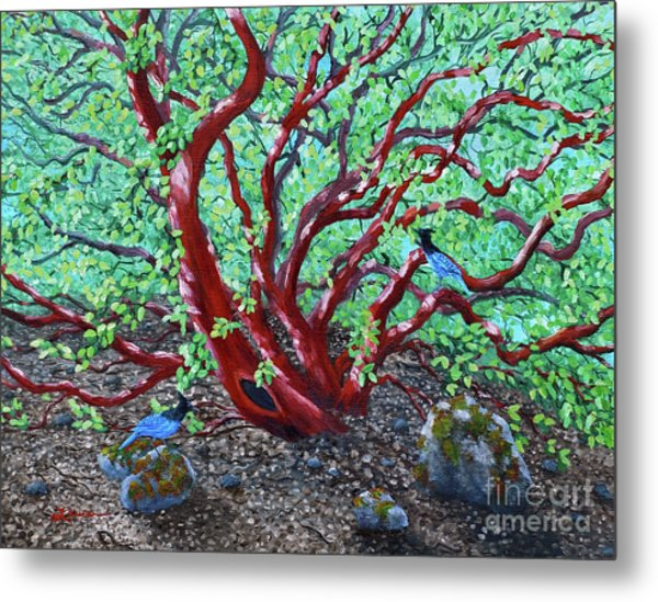 Morning Manzanita Metal Print