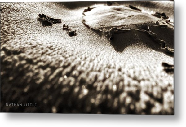 Morning Mushroom Top Metal Print