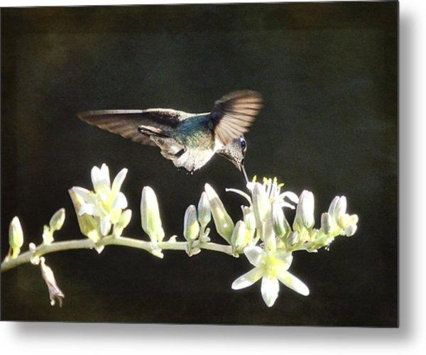 Morning Nectar Flyby  Metal Print