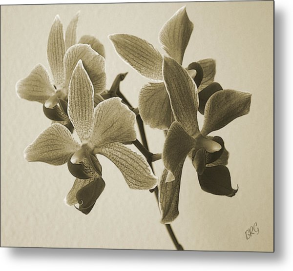 Morning Orchid Metal Print