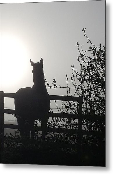 Metal Print featuring the photograph Morning Silhouette #1 by Deb Martin-Webster
