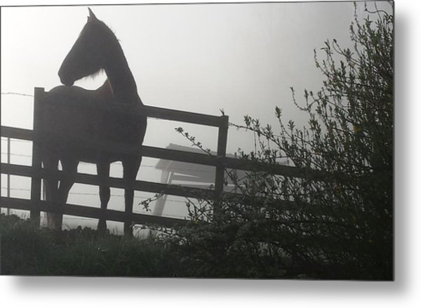 Metal Print featuring the photograph Morning Silhouette #2 by Deb Martin-Webster