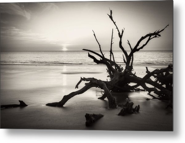 Morning Sun On Driftwood Beach In Black And White Metal Print