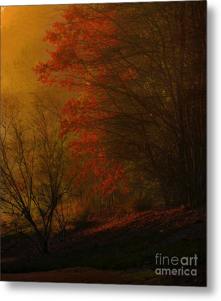Morning Sunrise With Fog Touching The Tree Tops In Georgia. Metal Print