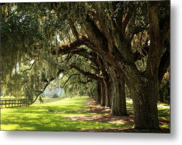 Morning Under The Mossy Oaks Metal Print