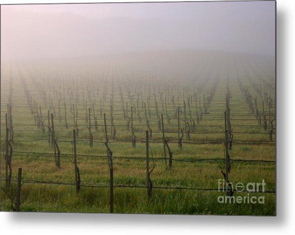 Morning Vineyard Metal Print