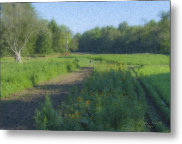 Morning Walk At Langwater Farm Metal Print