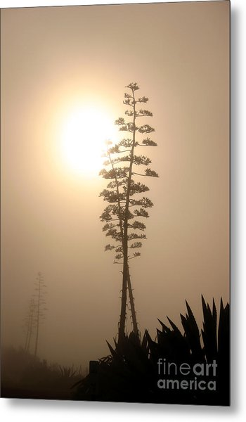 Morning Yucca Metal Print