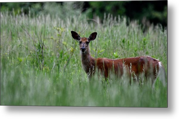 Morninng Deer Metal Print