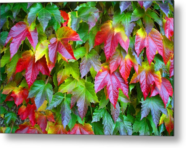 Moselle Valley Leaves Metal Print