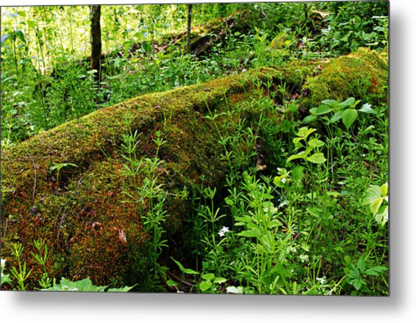Moss Covered Log 2 Metal Print