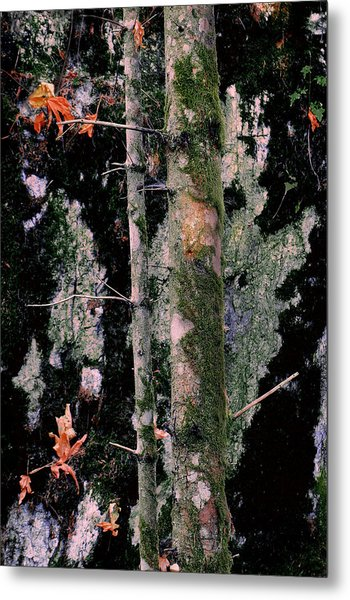 Moss Incognito Metal Print