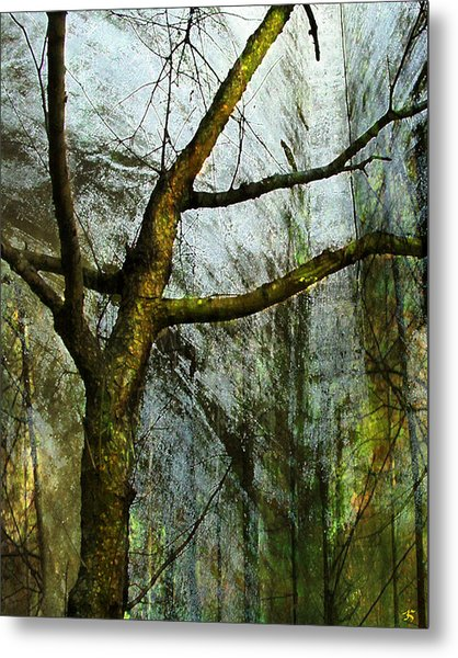 Moss On Tree Metal Print