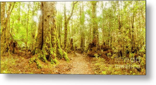 Mossy Forest Trails Metal Print