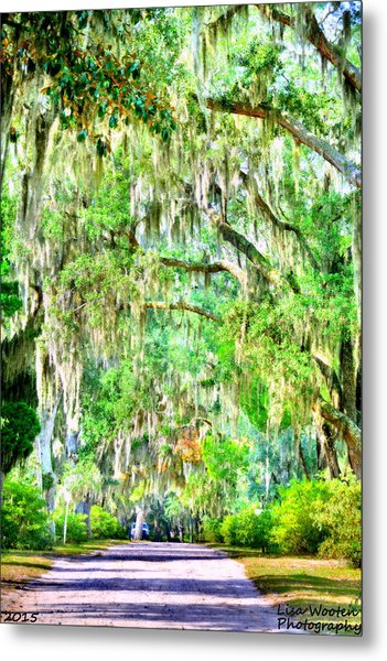 Metal Print featuring the photograph Mossy Oak Pathway H D R by Lisa Wooten