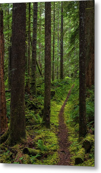 North Souixon Creek Mossy Trail Metal Print