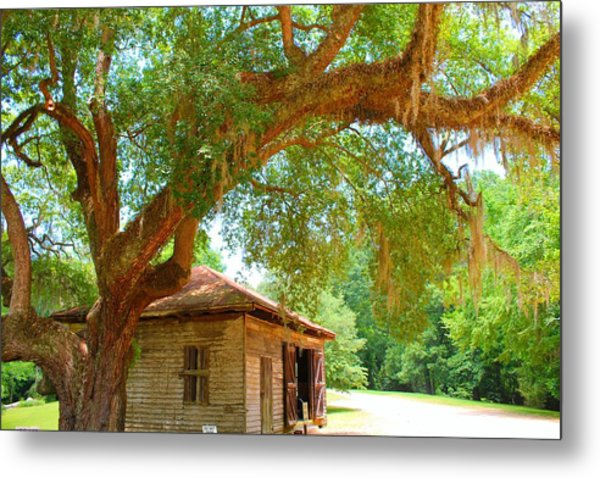 Mossy Tree In Natchez Metal Print