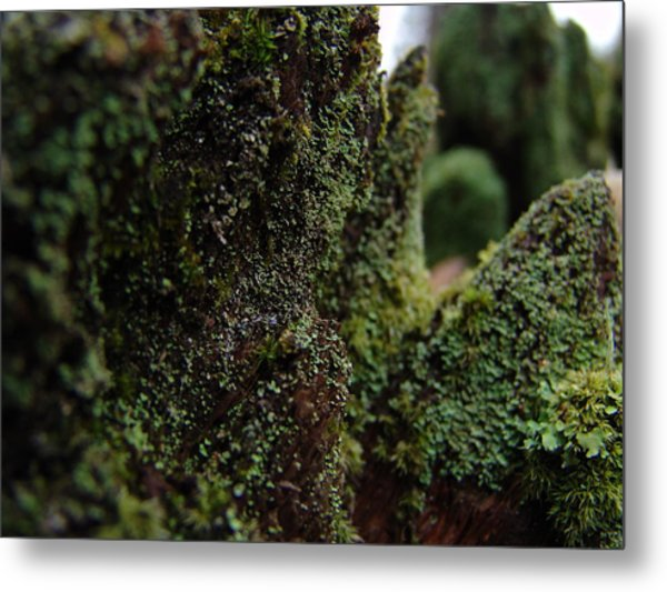 Mossy Wood 008 Metal Print by Ryan Vaal
