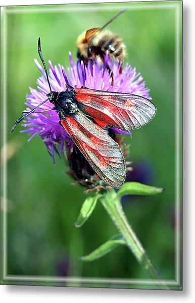 Moth Metal Print by Joy Powell