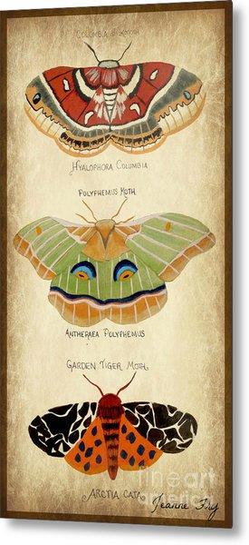 Moth Study Metal Print