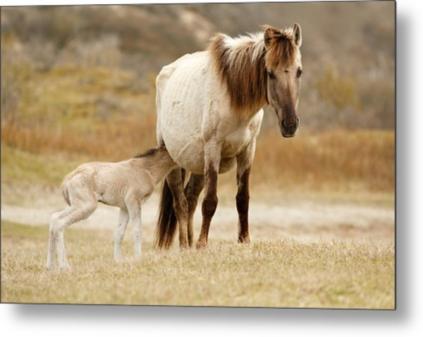 Mother And Baby Horse Metal Print