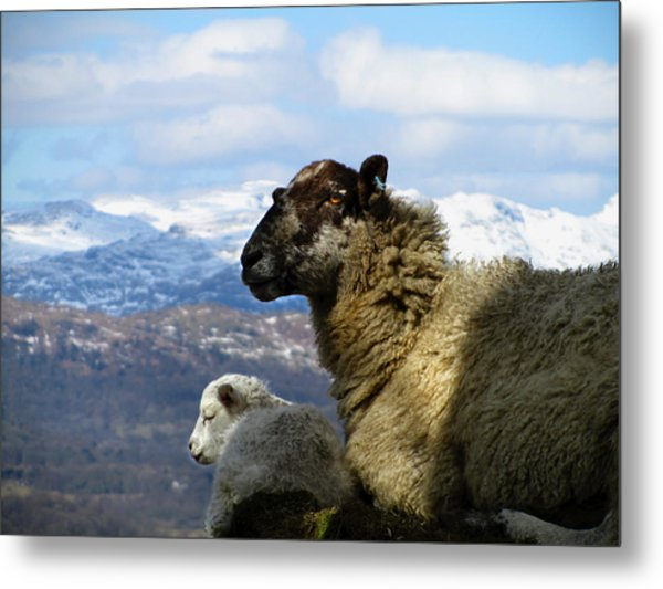 Mother And Lamb Metal Print