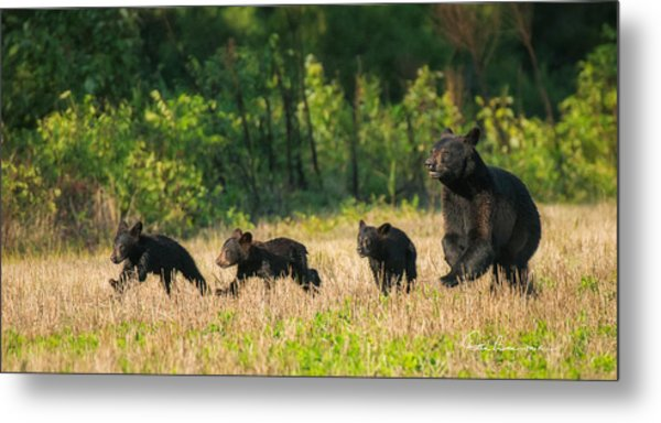 Mother Black Bear And Three Cubs 7006 Metal Print