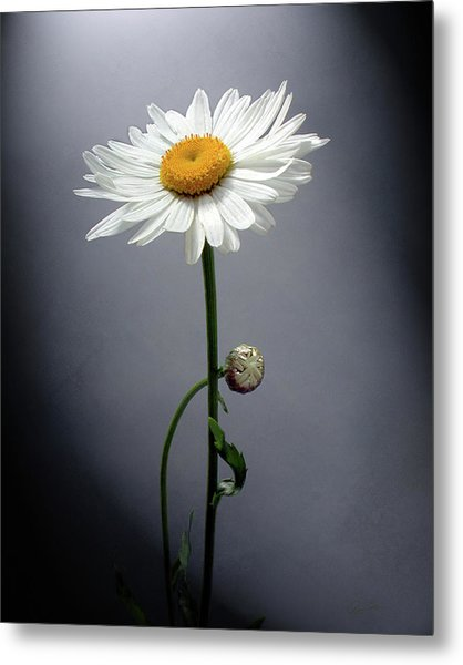 Mother Daisy Metal Print