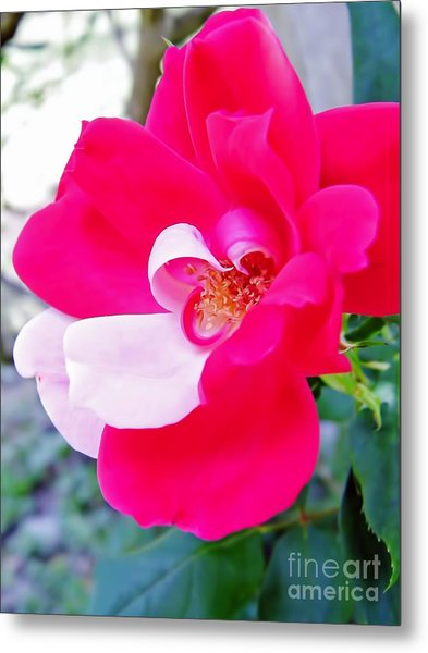 Mother - Natures - Best Metal Print