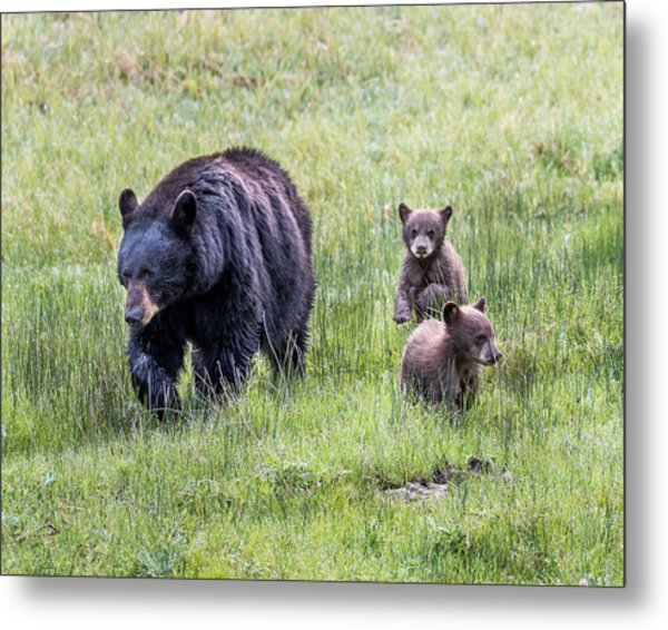 Mothers Love Metal Print by Robert Yone