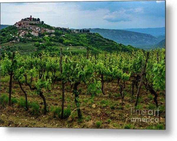 Motovun And Vineyards - Istrian Hill Town, Croatia Metal Print