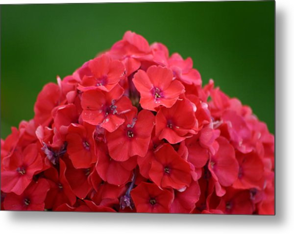 Mount Flower Metal Print by Dennis Curry