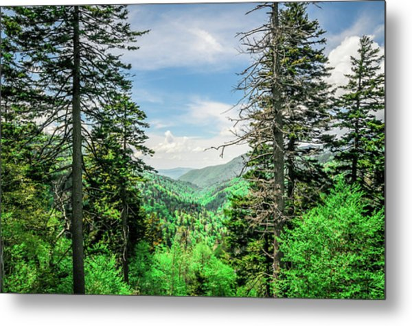 Mountain Forest Metal Print