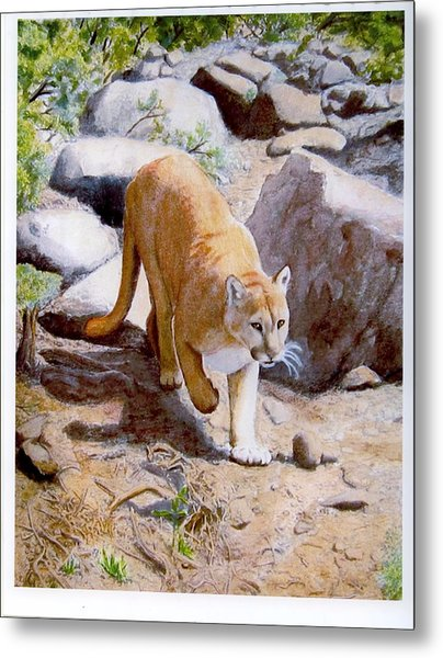 Mountain Lion In The Wild Metal Print by Lorraine Foster