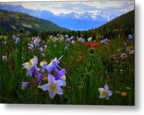 Mountain Wildflowers Metal Print