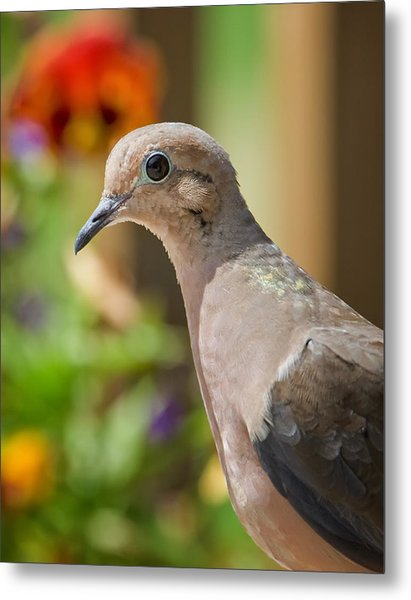 Mourning Dove And Flowers Metal Print